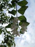 Flor al cielo fotos de archivo