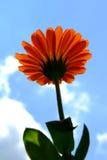Flor alaranjada foto de stock