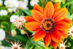 Flor alaranjada bonita no close up foto de stock