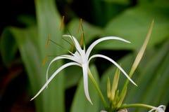 A flor alaranjada de Abstarct borrou o fundo foto de stock