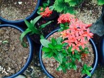 A flor alaranjada está florescendo na luz do dia fotos de stock