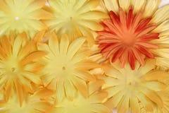 Flor alaranjada no amarelo Fotografia de Stock Royalty Free