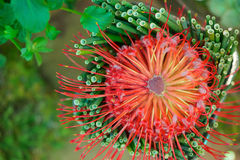 Flor alaranjada no fundo verde Fotos de Stock