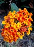 A flor alaranjada no graden fotografia de stock royalty free