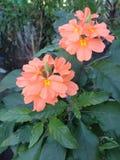Flor alaranjada no jardim foto de stock royalty free