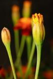 Flor alaranjada sobre o fundo borrado imagens de stock