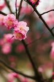 Flor alegre Imágenes de archivo libres de regalías