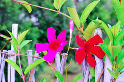 Flor alpestre foto de archivo libre de regalías
