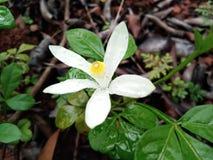 Flor altamente focalizada imagem de stock