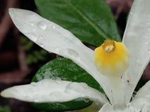 Flor altamente focalizada imagem de stock royalty free