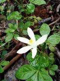Flor altamente focalizada foto de stock royalty free