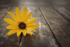 Flor amarela 2 fotos de stock