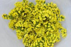 Flor amarela Imagem de Stock