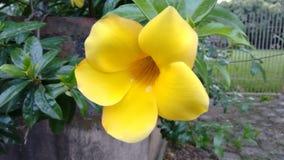 Flor amarela Arkivfoton