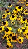 A flor amarela Imagens de Stock Royalty Free