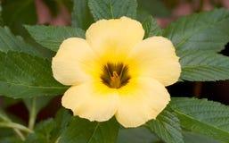 Flor amarela fotografia de stock