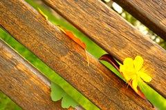 a flor amarela, as folhas coloridas e as barras de madeira esverdeiam o fundo Fotografia de Stock