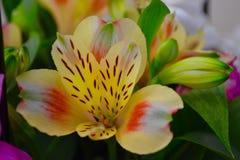 Flor amarela bonita fotografia de stock