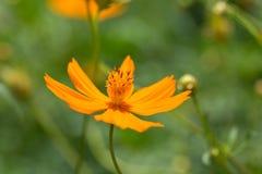 Flor amarela bonita fotos de stock
