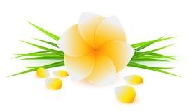 Flor amarela bonita Ilustração do Vetor