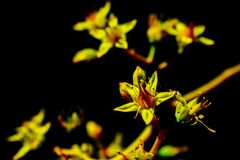 Flor amarela bonita Natureza amarela fotos de stock royalty free