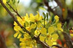 Flor amarela bonita no fundo borrado do jardim Fotos de Stock