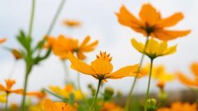 A flor amarela bonita video e o céu azul borram o fundo exterior natural da paisagem vídeos de arquivo