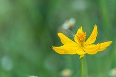 Flor amarela com fundo borrado imagens de stock royalty free