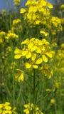 Flor amarela com material surpreendente imagem de stock