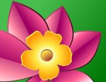 Flor amarela com pétalas cor-de-rosa Fotografia de Stock Royalty Free
