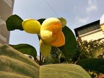 Flor amarela como a forma cor-de-rosa fotografia de stock royalty free
