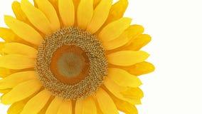 Flor amarela 3D Imagens de Stock Royalty Free