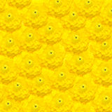 Flor amarela da mola imagens de stock royalty free