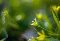 Flor amarela da mola em um fundo fantástico borrado imagem de stock