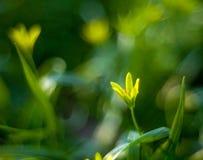 Flor amarela da mola em um fundo fantástico borrado fotografia de stock royalty free