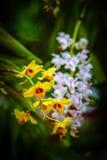 Flor amarela da orquídea imagens de stock