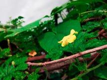 Flor amarela dentro com folhas verdes fotografia de stock