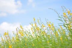 A flor amarela diz olá! ao céu azul fotografia de stock royalty free