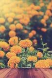 Flor amarela do cravo-de-defunto com tabela de madeira Foto de Stock Royalty Free