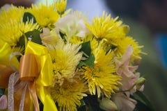 Flor amarela do crisântemo foto de stock