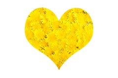 Flor amarela do dente-de-leão no branco Fotografia de Stock Royalty Free