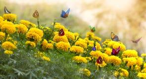 Flor amarela do Marigold fotos de stock royalty free
