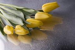Flor amarela do tulip da mola no fundo cinzento Foto de Stock