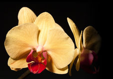 Flor amarela e vermelha na flor imagem de stock royalty free