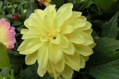 Flor amarela em Hong Kong Flower Exhibition foto de stock royalty free