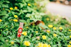 A flor amarela está florescendo ao longo da estrada imagem de stock royalty free