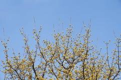 Flor amarela minúscula com fundo do céu azul Foto de Stock Royalty Free