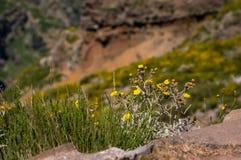 Flor amarela na borda imagem de stock royalty free