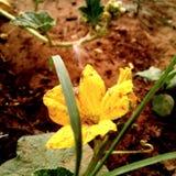 Flor amarela na luz do dia foto de stock