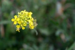 Flor amarela na mola foto de stock